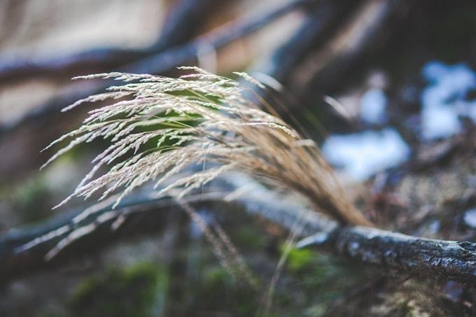 kaboompics.com_Closeup view of long dry grass _ Depth of Field-S-min